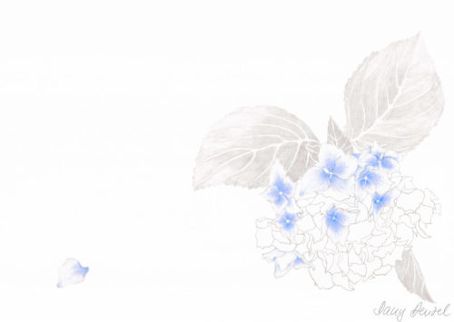 Hortensie (Hydrangea) 2009