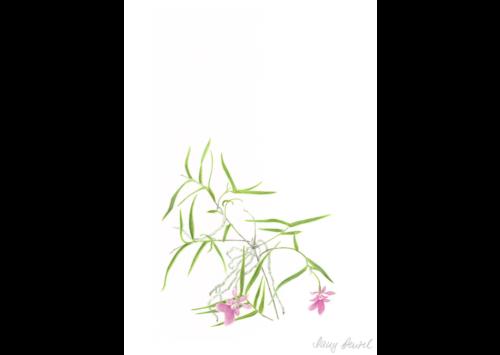 Kew – Oerstedella centradenia 2014